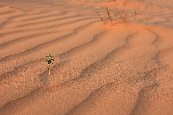 free lesson plan and resources about desert biomes