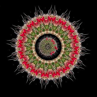 cactus mandalas - 3.jpg