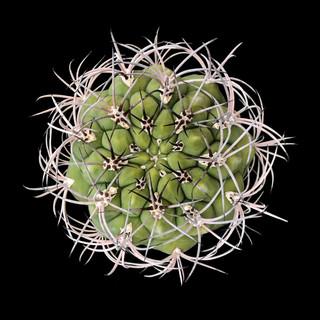 cactus - 27.jpg