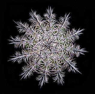 cactus - 1.jpg