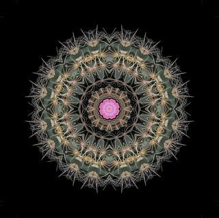 cactus mandalas - 121.jpg
