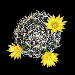 cactus - 14.jpg
