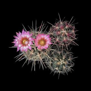 cactus - 155.jpg