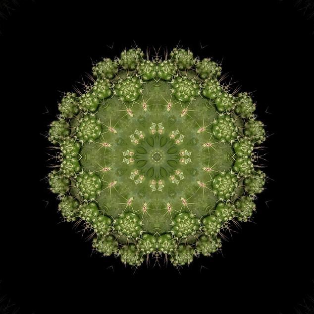 cactus mandalas - 115.jpg