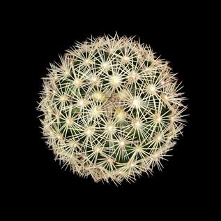cactus - 102.jpg