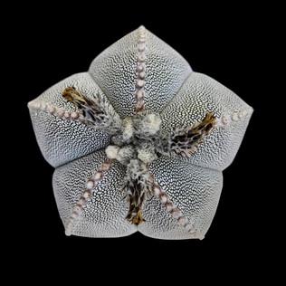 cactus - 100.jpg
