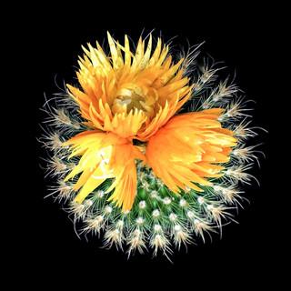 cactus - 24.jpg