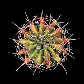 cactus - 224.jpg