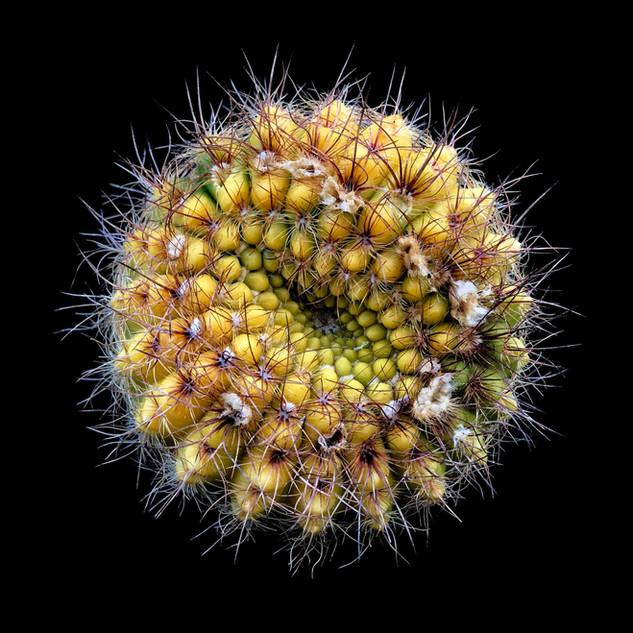 cactus - 143.jpg