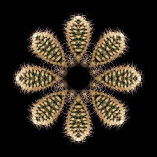 cactus mandalas - 49.jpg