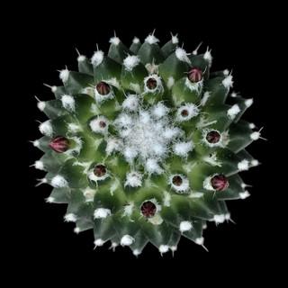 cactus - 19.jpg