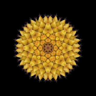 cactus mandalas - 106.jpg