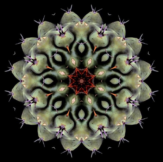 cactus mandalas - 90.jpg