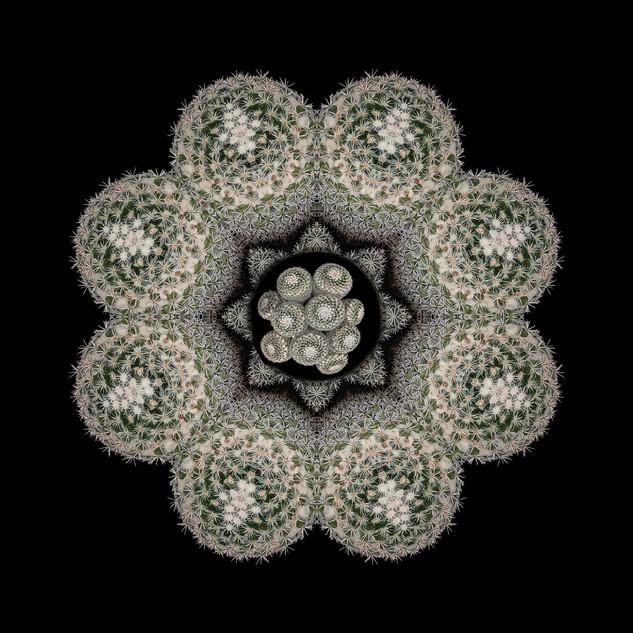 cactus mandalas - 12.jpg