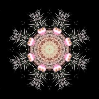 cactus mandalas - 104.jpg