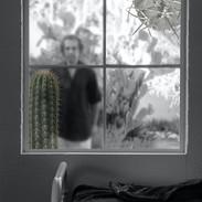 cactus portraits - 19.jpeg