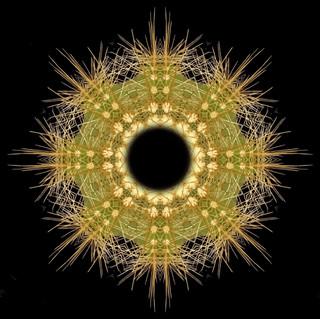cactus mandalas - 23.jpg