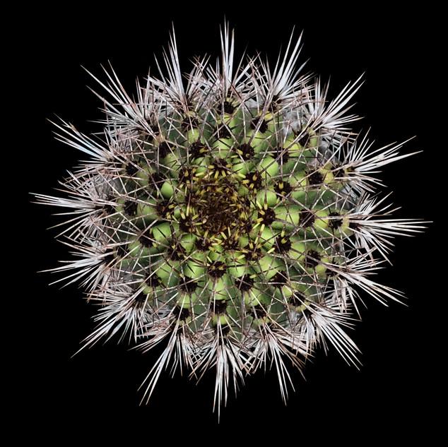 cactus - 109.jpg