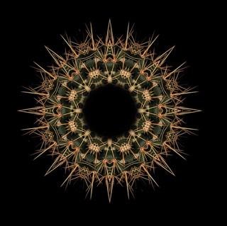 cactus mandalas - 25.jpg