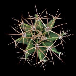 cactus - 200.jpg