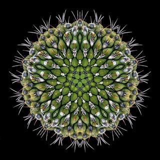 cactus mandalas - 65.jpg