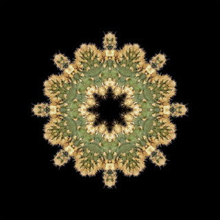 cactus mandalas - 45.jpg