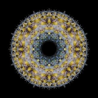 cactus mandalas - 110.jpg