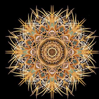 cactus mandalas - 107.jpg