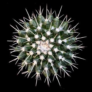 cactus - 22.jpg