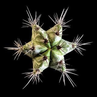 cactus - 131.jpg