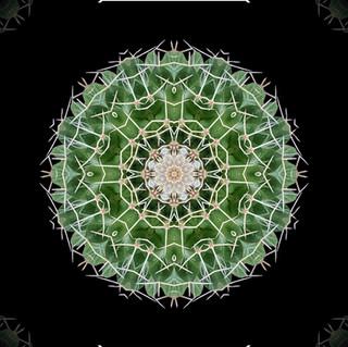 cactus mandalas - 100.jpg