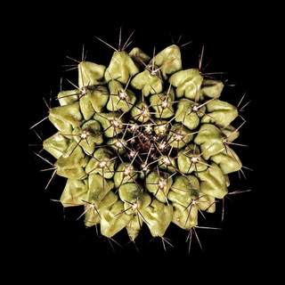 cactus - 17.jpg