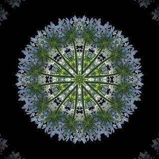 cactus mandalas - 92.jpg