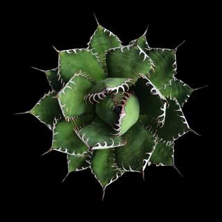 cactus - 204.jpg