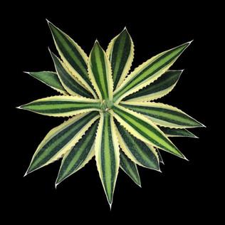 cactus - 111.jpg