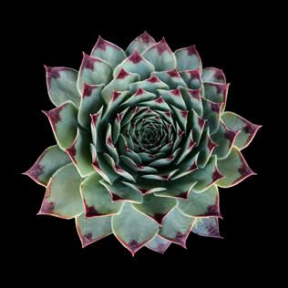 cactus - 107.jpg