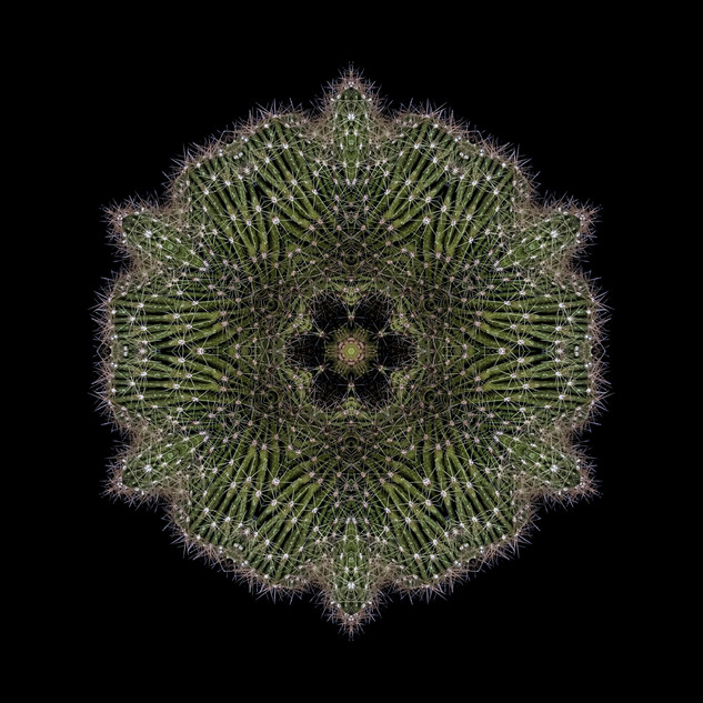 cactus mandalas - 123.jpg