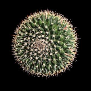 cactus - 7.jpg