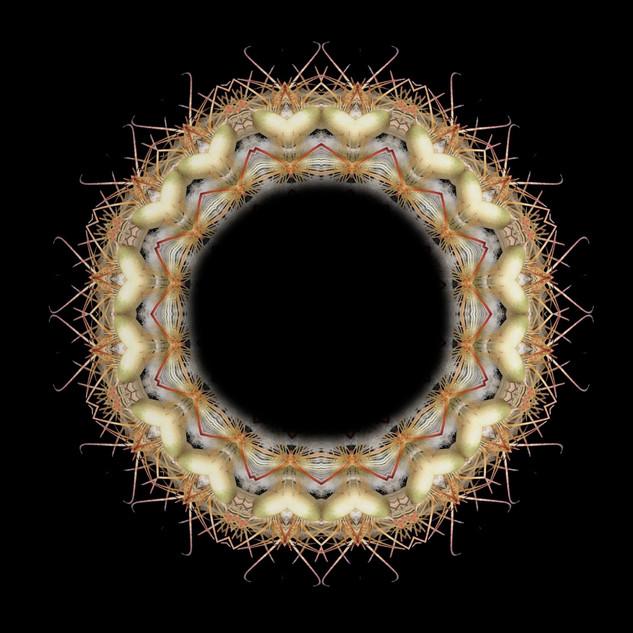 cactus mandalas - 114.jpg