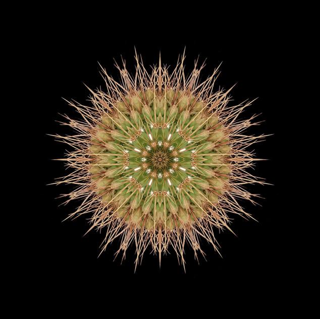 cactus mandalas - 113.jpg