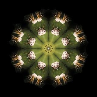 cactus mandalas - 138.jpg