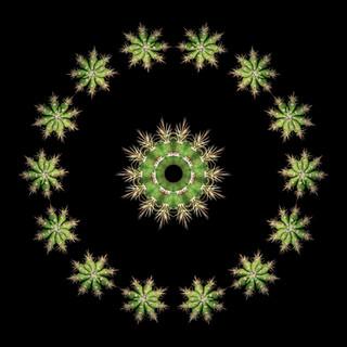 cactus mandalas - 42.jpg
