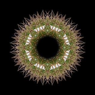 cactus mandalas - 22.jpg