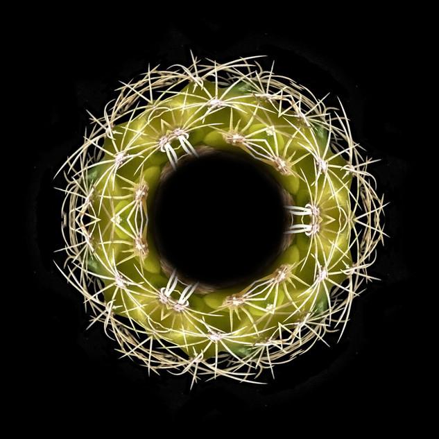 cactus mandalas - 37.jpg