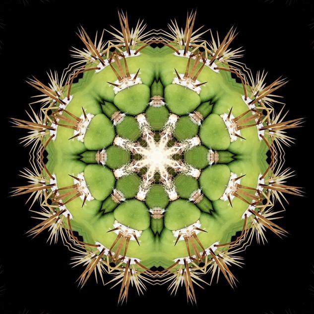 cactus mandalas - 131.jpg