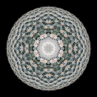 cactus mandalas - 94.jpg