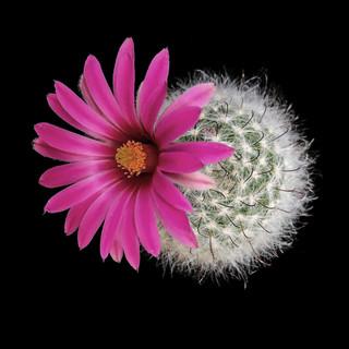 cactus - 15.jpg