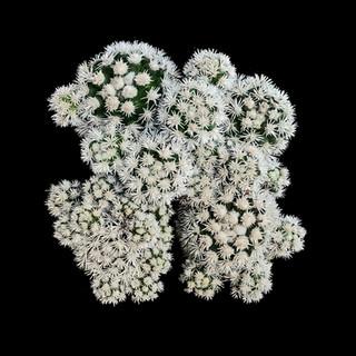 cactus - 21.jpg