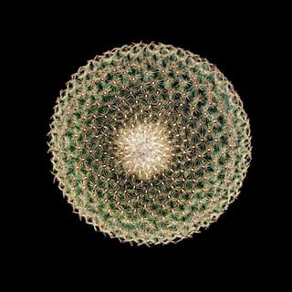 cactus - 172.jpg