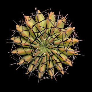 cactus - 219.jpg